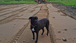 В Череповце построят площадку для собак