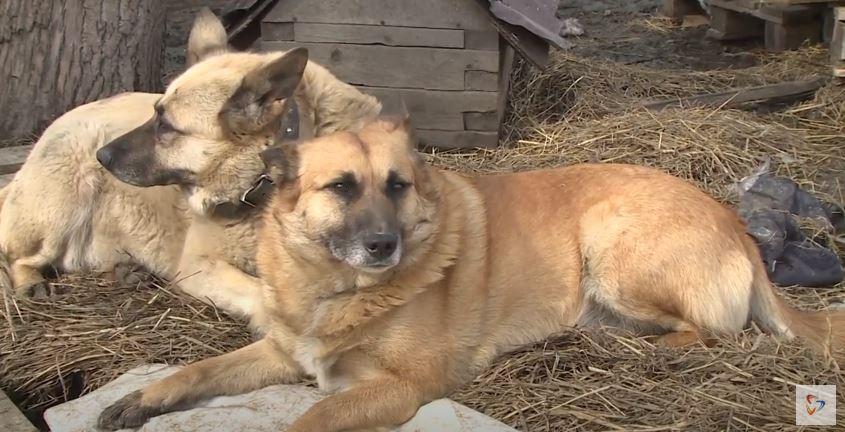Депутаты поддержали федеральный законопроект об ответственном обращении с животными