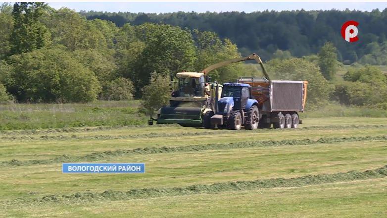 85 тысяч тонн силоса удалось заготовить аграриям Вологодского района с начала кормозаготовительных работ