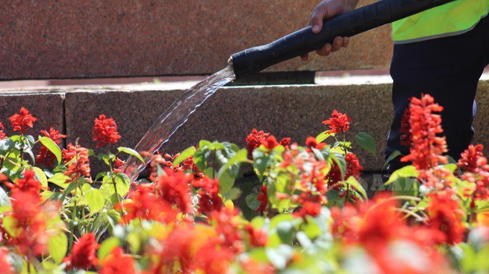 Экоактивисты будут в жару поливать городские клумбы в Череповце