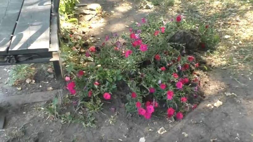Вандалы вырвали цветы возле памятника павшим солдатам в Устюжне
