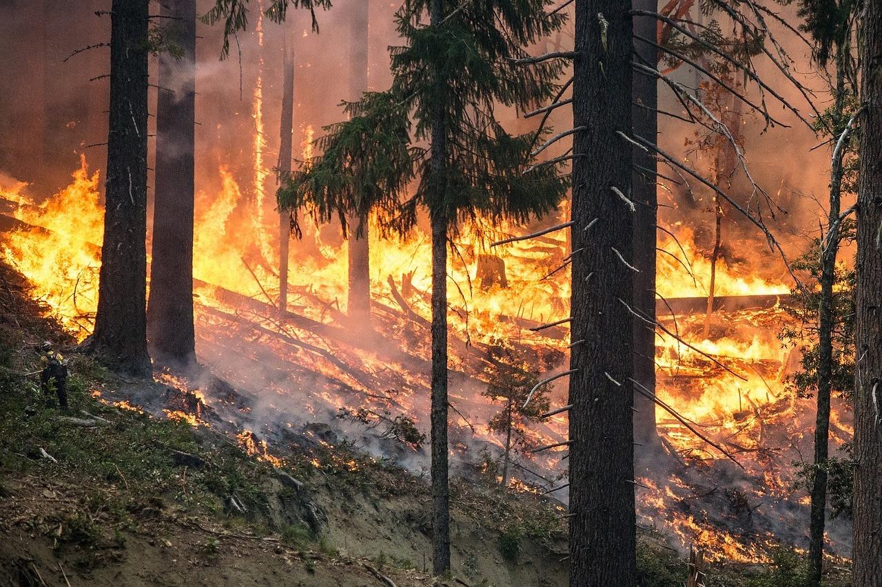 Площадь возгорания — больше 50 гектаров