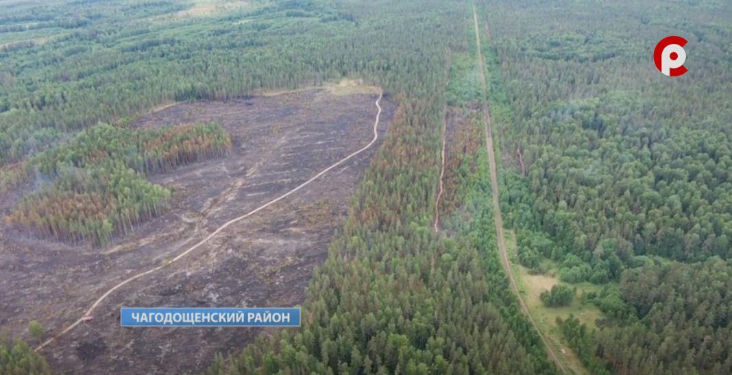 Изначально в Чагодощенском районе загорелись 30 гектаров леса
