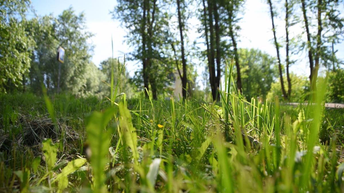 В Вологде запущена процедура расторжения контракта с подрядчи��ом, занимающимся покосом травы