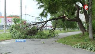 Чем дальше от города, тем сложнее, по словам специалистов, добраться до упавших деревьев