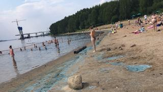 Отчего позеленели пляжи  Череповца