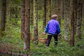 7 человек потерялись в лесу с начала года