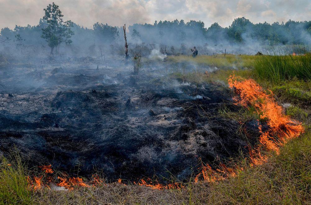 Площадь торфяного пожара - 20 гектаров