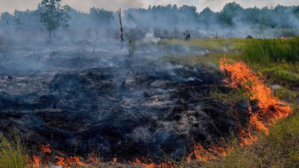 20 гектаров торфа горит в Чагодощенском районе