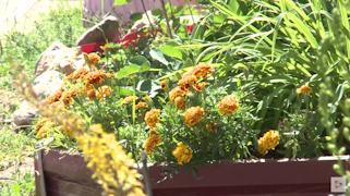 На клумбах — георгины, розы, циннии, астильба, флоксы и лилии