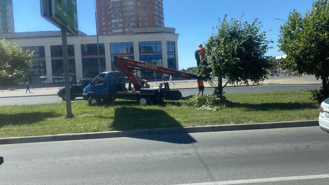 Двое бравых парней изуродовали дерево на Октябрьском проспекте в Череповце