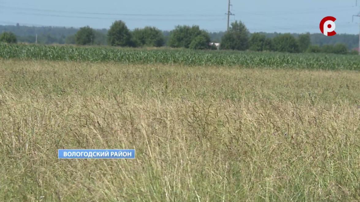 Режим повышенной готовности из-за засухи ввели в восьми районах Вологодчины