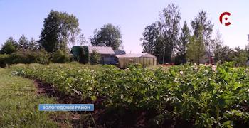 Для Галины огород — главное увлечение
