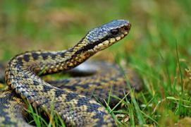 В жаркую погоду змеи часто выползают погреться