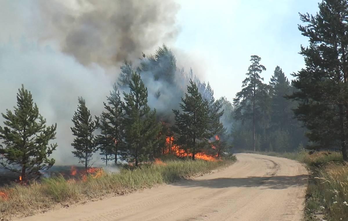 С начала года на Вологодчине зарегистрировано 44 лесных пожара.