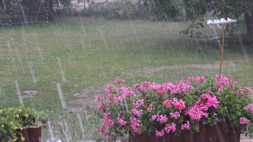 Небольшие дожди и даже грозы обещают синоптики на Вологодчине