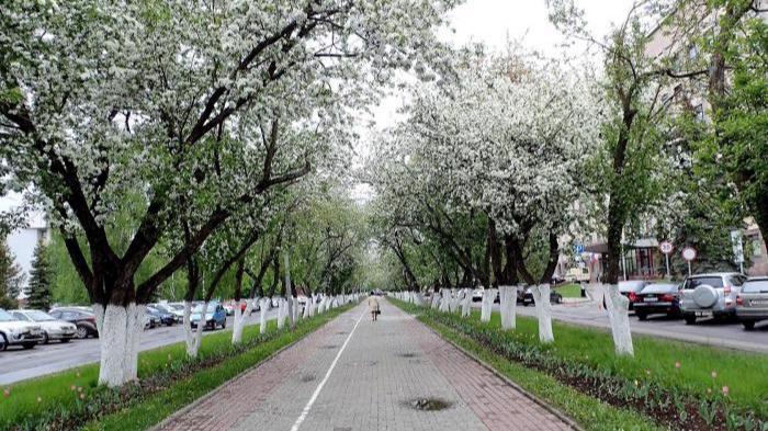 Аллея на Пушкинской улице в Вологде преобразится