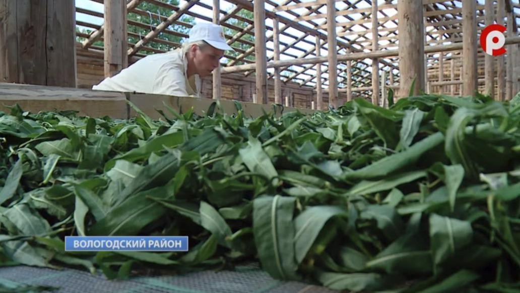 Ещё одно производство иван-чая запустили в регионе