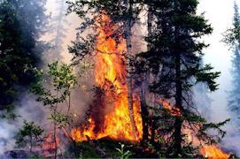 Фото: Департамент лесного комплекса Вологодской области