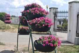Ежедневно 3 - 4 поливальные машины орошают 7 500 цветов на городских клумбах.