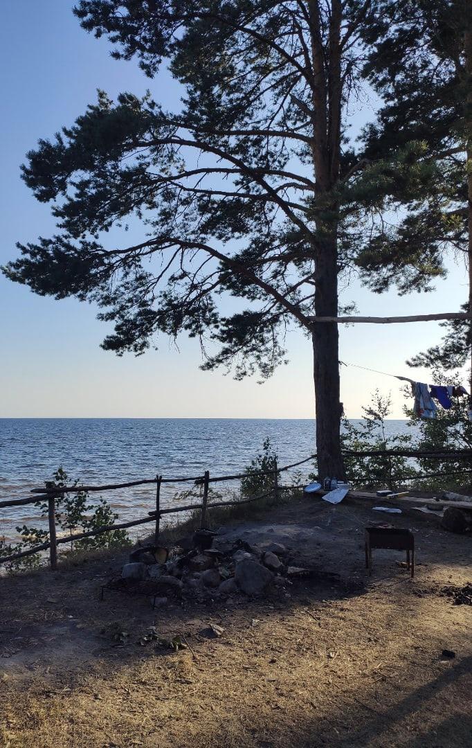 Встреча с волком произошла у Онежского озера