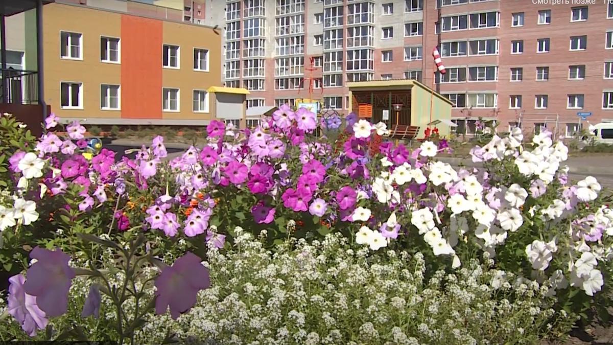 135 заявок уже отправили череповчане на конкурс «Цветущий город» этим летом