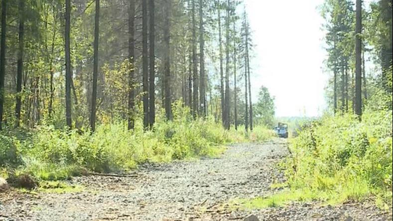 Как не потеряться в лесу, рассказали спасатели