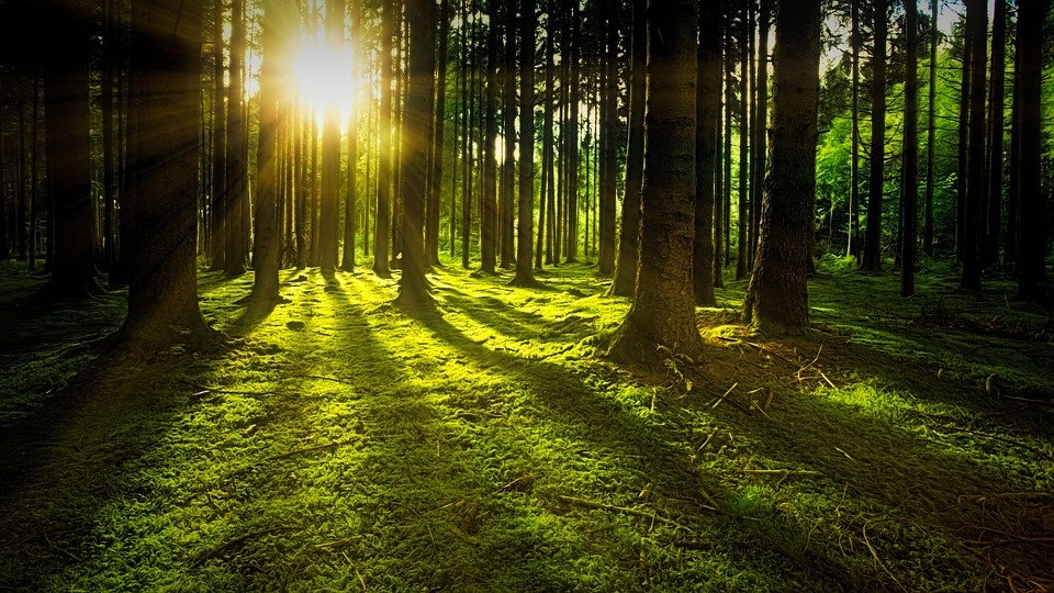 Походы в лес остаются любимым времяпрепровождением вологжан