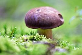 Собирайте только те грибы, которые вам хорошо знакомы