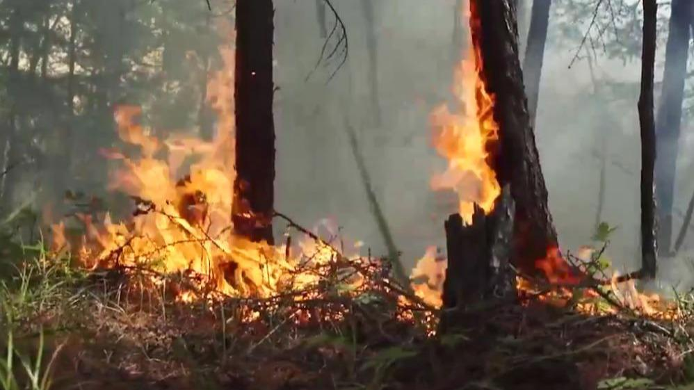 Все лесные пожары локализованы на Вологодчине