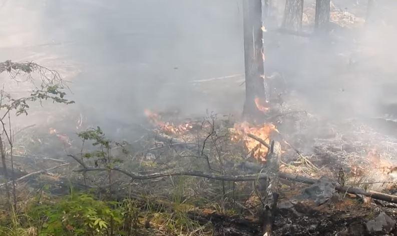 С начала пожароопасного сезона на Вологодчине зарегистрировано 90 лесных пожаров