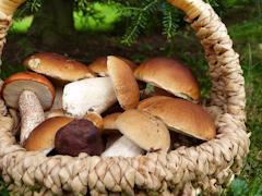 Поход в лес за грибами — одно из любимых занятий россиян
