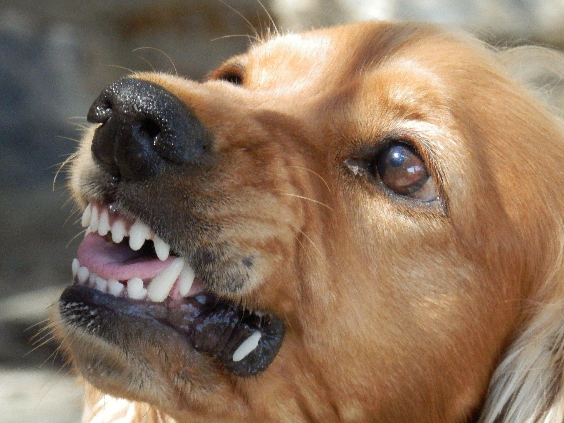 Одним из признаков заболевания животного бешенством является его необычное, неадекватное поведение