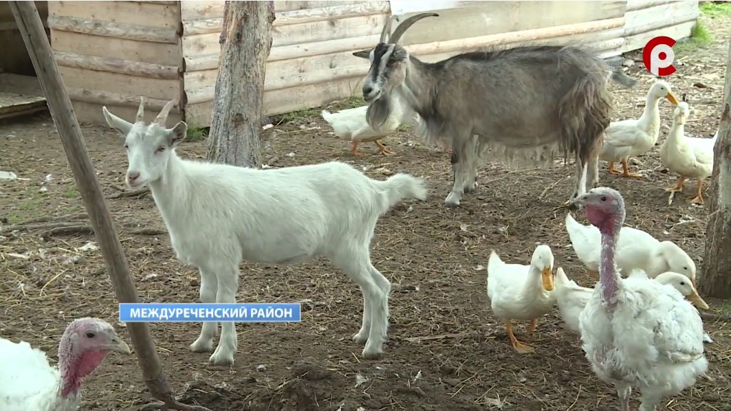 Почти полсотни кроликов, 13 индюков, 9 куриц выращивают в своём доме семья Подгорбунских