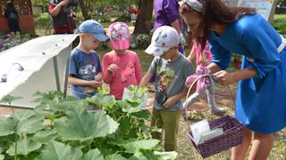 В детском саду учатся выращивать овощи