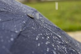Атмосферный фронт принесет в регион дожди и сильные порывы ветра