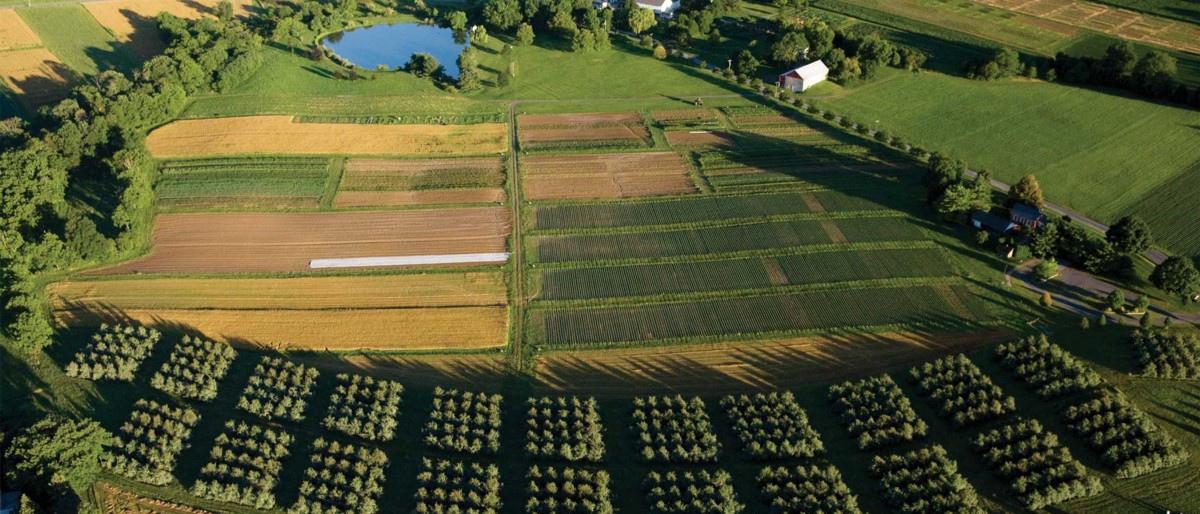 Карбоновая ферма должна поглощать 0,7 миллионов тонн углекислого газа в год