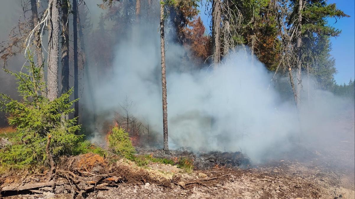 Крупный лесной пожар ликвидирован в Верховажском районе