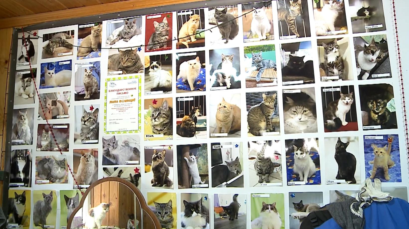 Десятки кошек обрели хозяев
