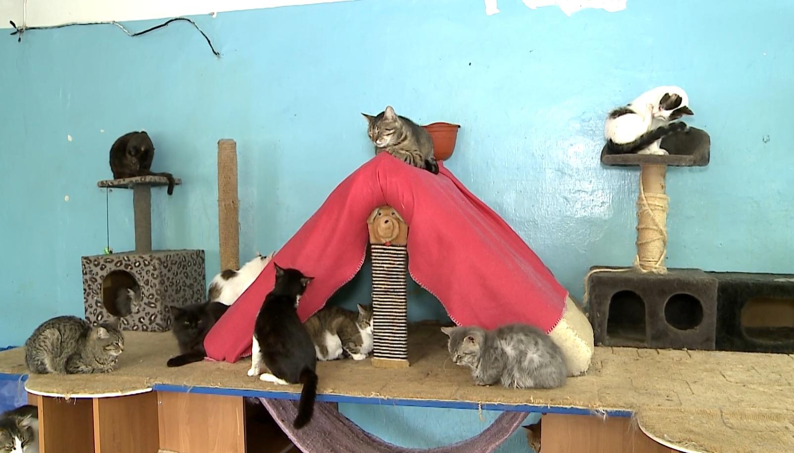 Сейчас в Череповце 7 приютов для животных