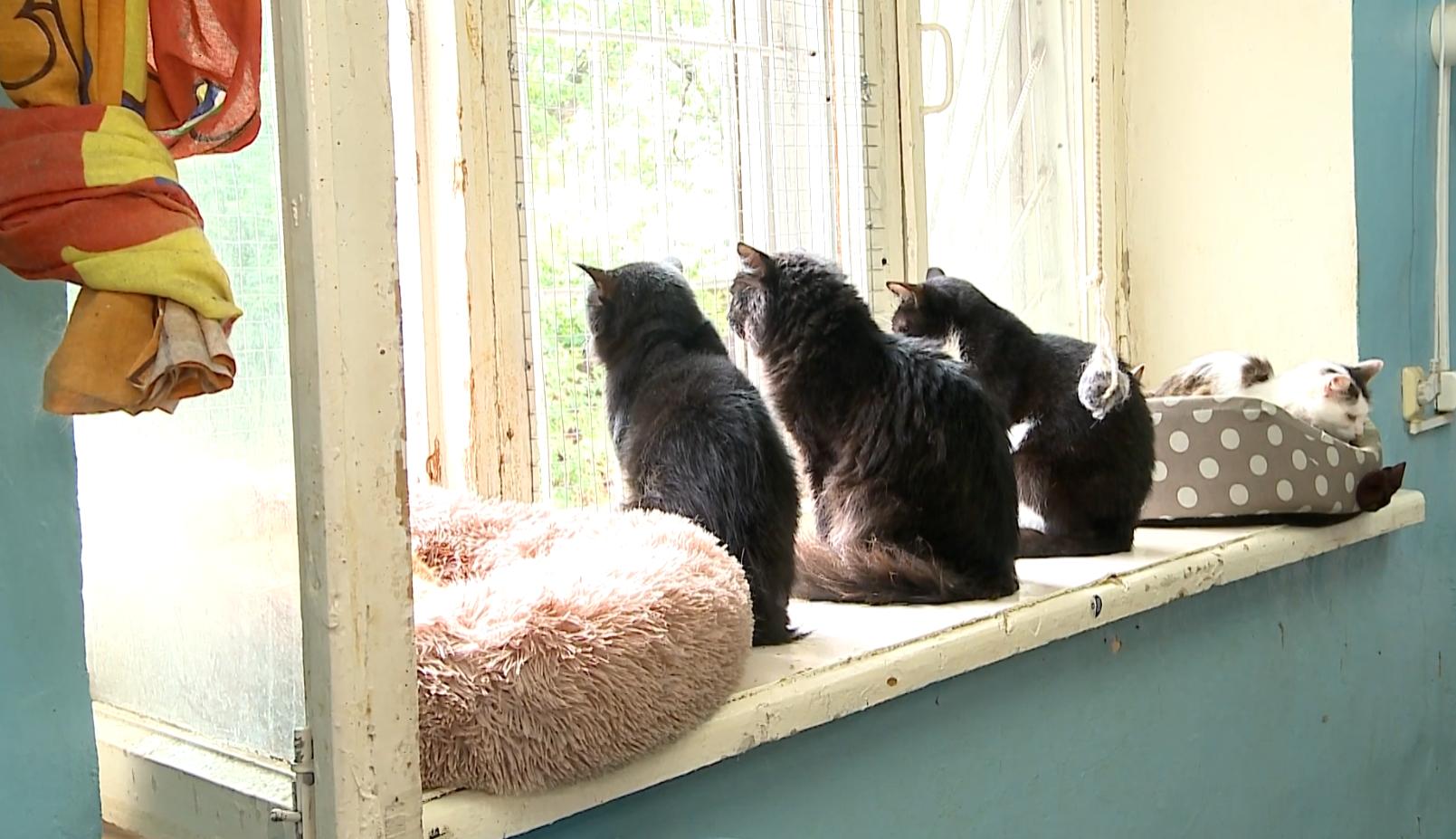 Каждая кошка ждет своего человека