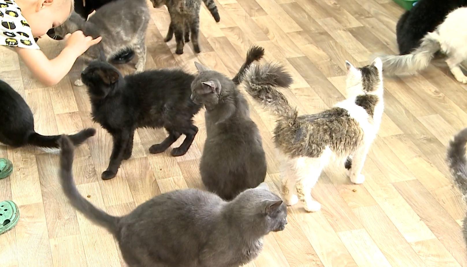 Кошек в приюте - больше сотни