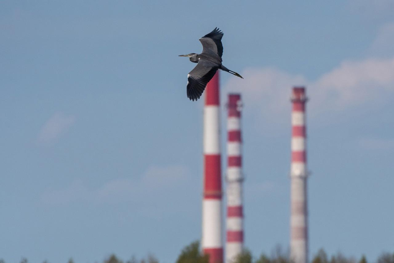 «Северсталь» как участник федерального проекта «Чистый воздух» вложила в мероприятия по снижению выбросов Череповецкого меткомбината 6,8 млрд. руб.
