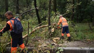 Всего на данный момент поступил сигнал о 24 упавших деревьях в разных частях города