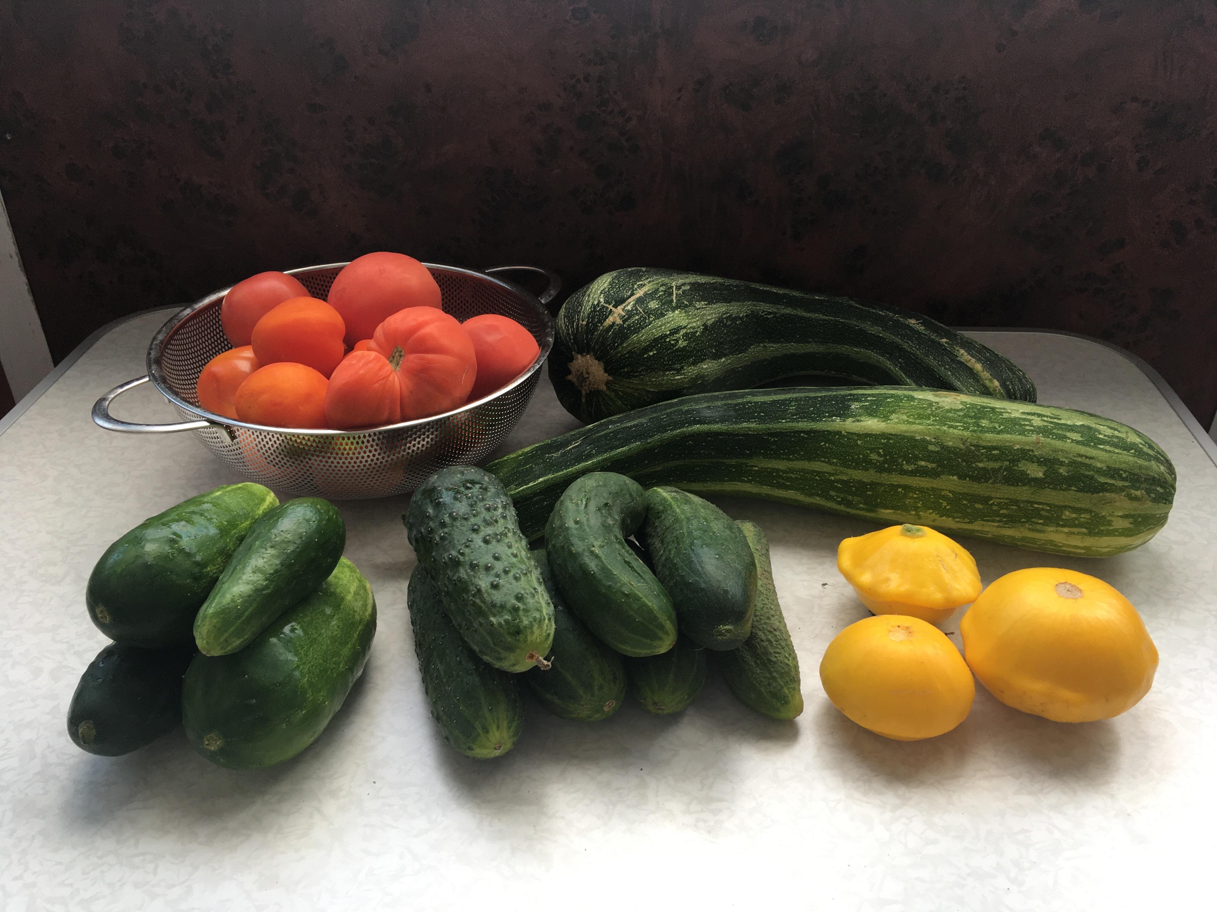 Дачники радуются и вместе с тем думают, куда пристроить излишки выращенных овощей.
