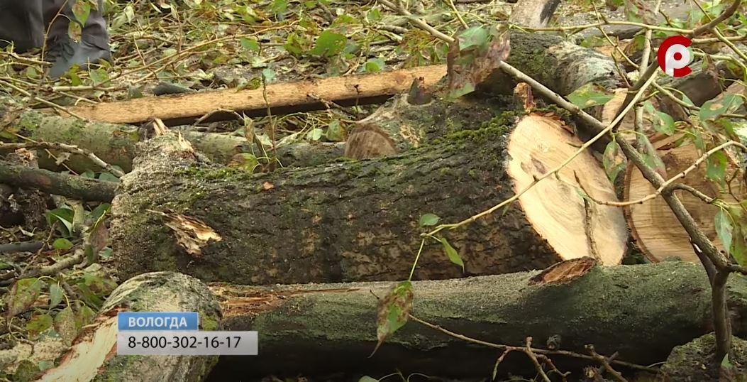 В городской колл-центр продолжают поступать обращения по упавшим деревьям и веткам