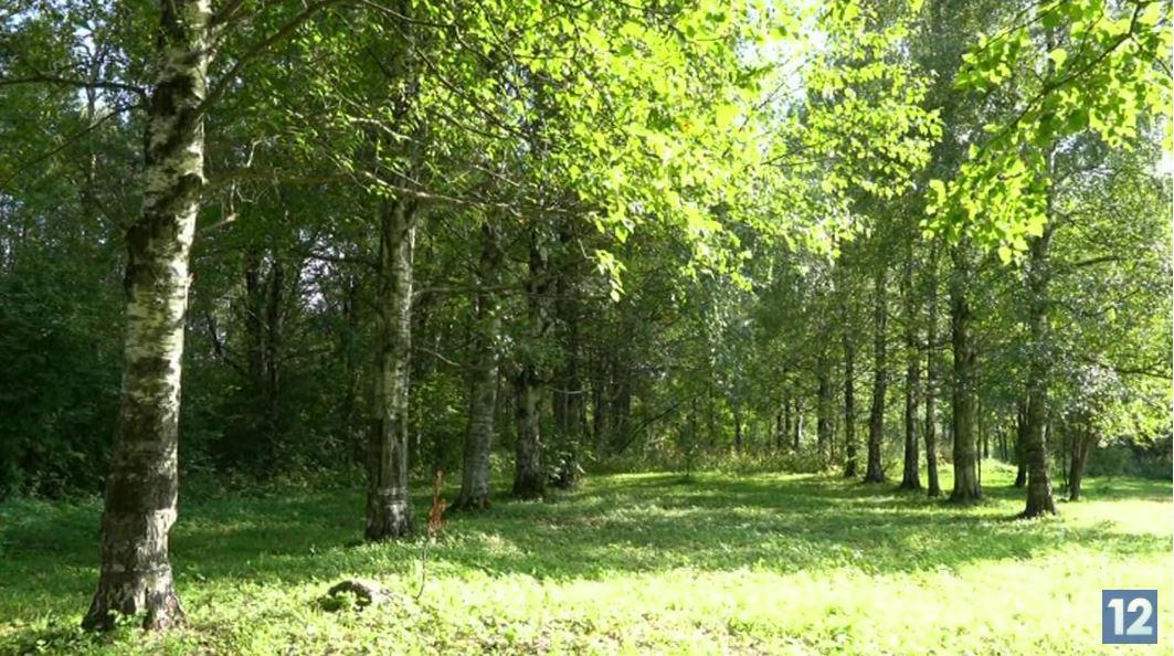 Здесь, по замыслу экспертов, должен быть тихий природный парк, который сохранит идентичность