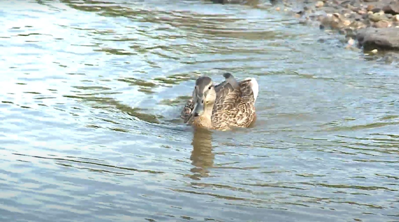 Птицы погибли в прудах на улицах Фрязиновской и Дзержинского