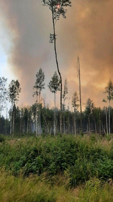 Фото Департамента лесного комплекса Вологодской области