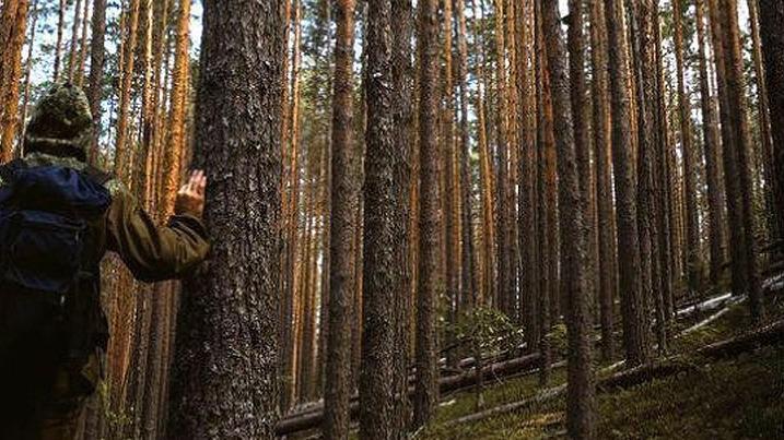 Двое вологжан потерялись в лесу за минувшие сутки, одного удалось найти